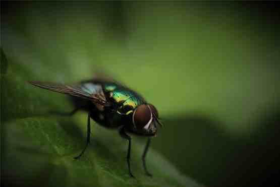 istanbul böcek ilaçlama