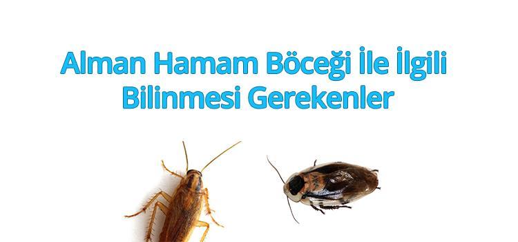 almanhamamböceği